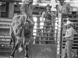 Hanging On Davie Florida Pro Rodeo - Steven Hodel Event Photography