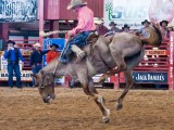 Bucking Horse at Davie Florida Pro Rodeo - Steven Hodel Event Photography