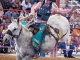 Bull Rider Davie Florida Pro Rodeo - Steven Hodel Event Photography