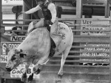 Florida Cowboy Davie Florida Pro Rodeo - Steven Hodel Event Photography