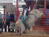 Bull Kick Davie Florida Pro Rodeo - Steven Hodel Event Photography