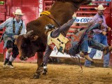 Bull Twist at Davie Florida Pro Rodeo - Steven Hodel Event Photography