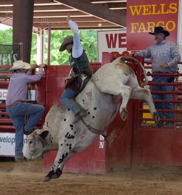 Bucking Mule