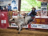 Bull Toss Davie Florida Pro Rodeo - Steven Hodel Event Photography