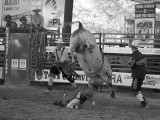 Bucking Horse at Davie FloridaPro Rodeo - Steven Hodel Event Photography
