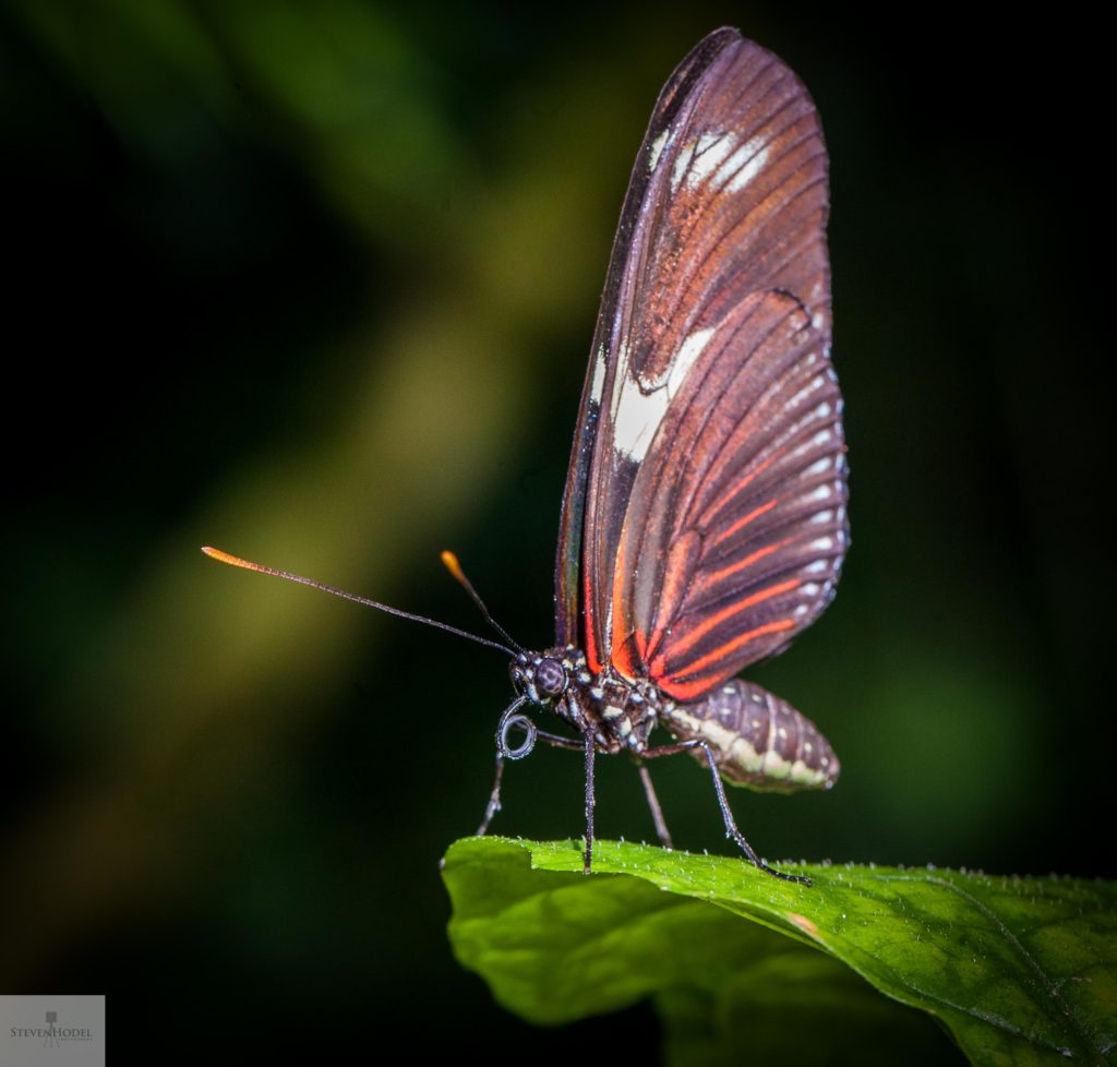 Steven Hodel Photography - The Butterfly on the Edge in Miami