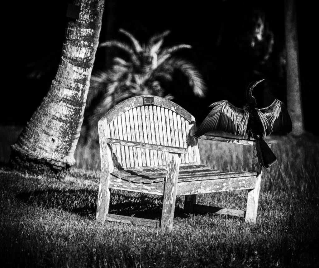 Steven Hodel Photography -  Restfull day at Fairchild Tropical Gardens in Miami
