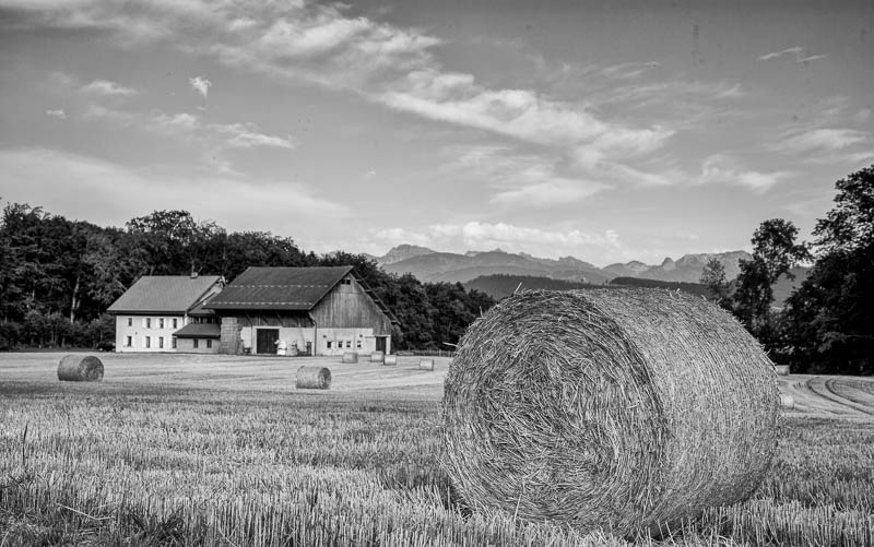 Steven Hodel Photography - Fields of Hay